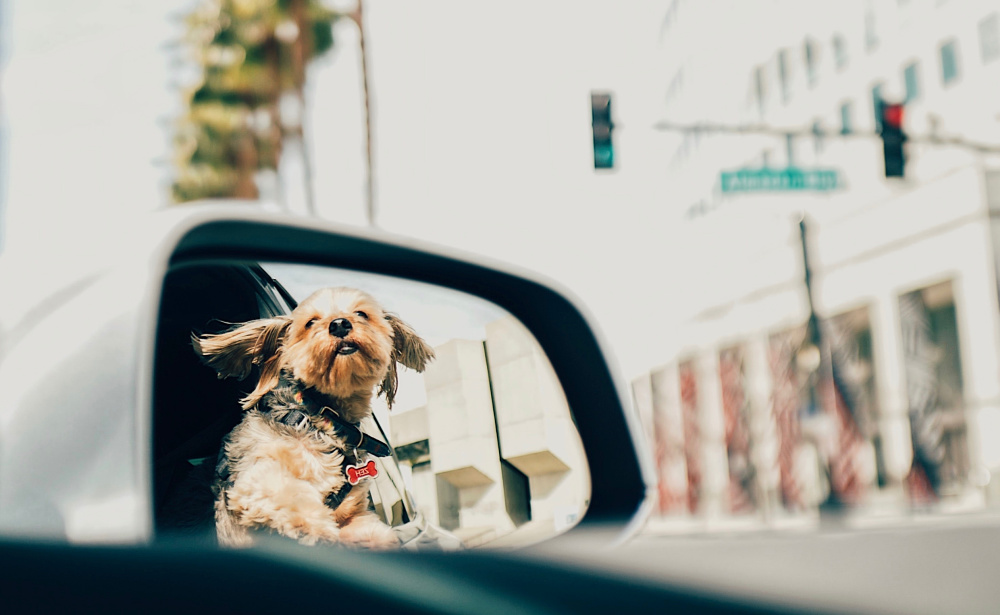 Organize Your Car - Dog in Window