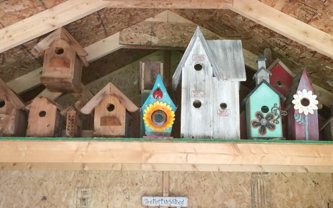 Overhauling Your Shed Can Help You Reclaim Your Passions